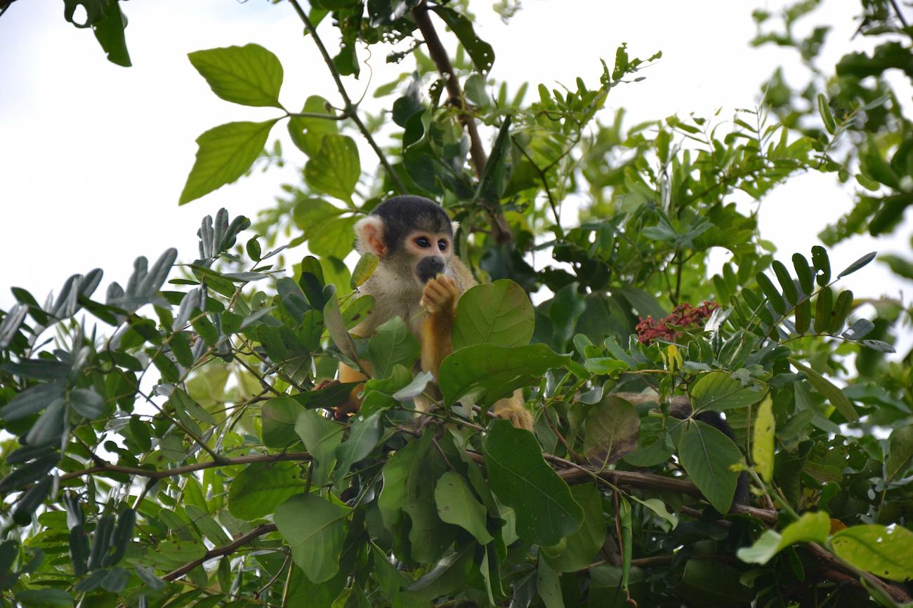 bolivia rurrenabaque apen