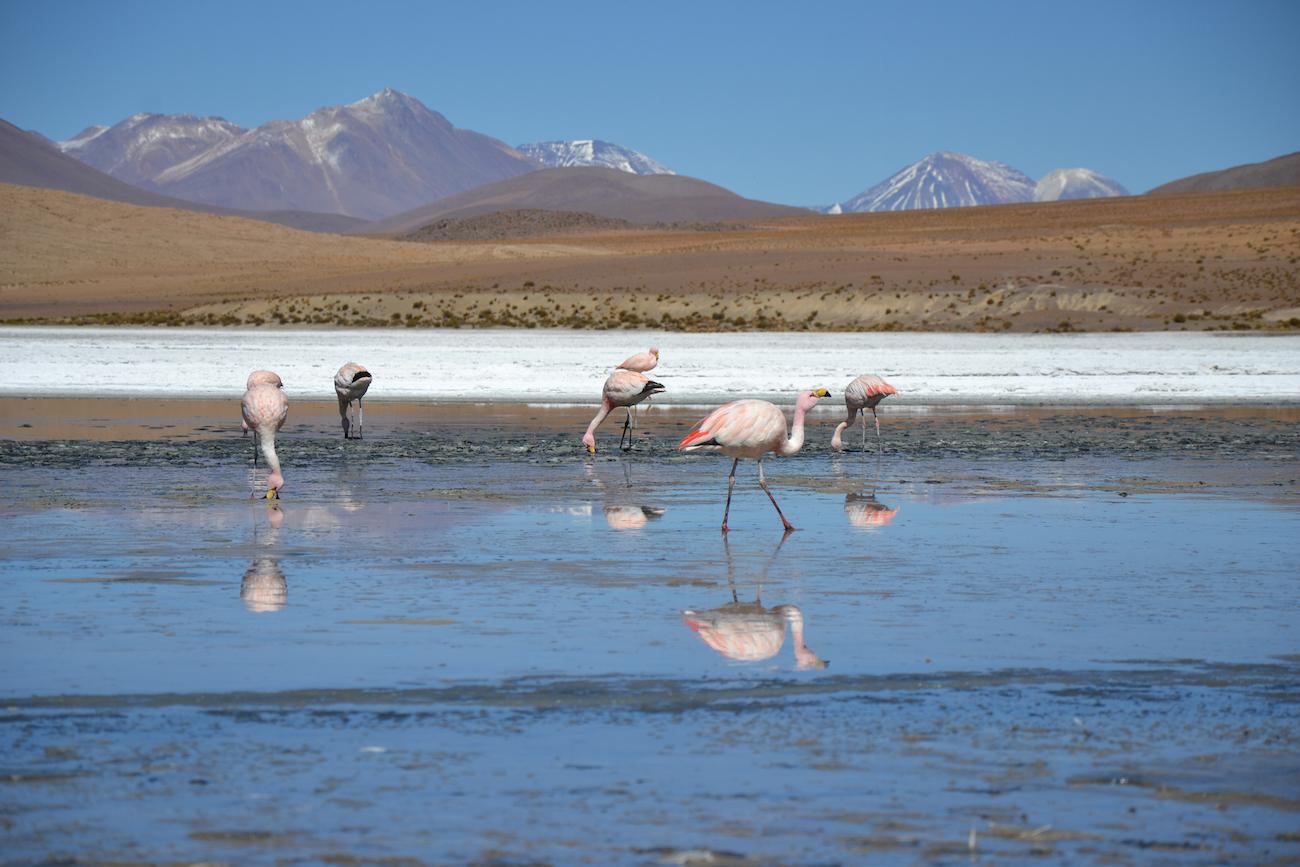 salar_uyuni_flamingo