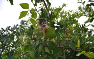 Rurrenabaque Amazone Bolivia