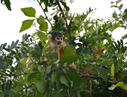 Ontdek de Amazone vanuit Rurrenabaque in Bolivia
