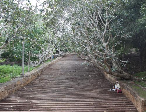 Reisroute door Sri Lanka in 4 weken