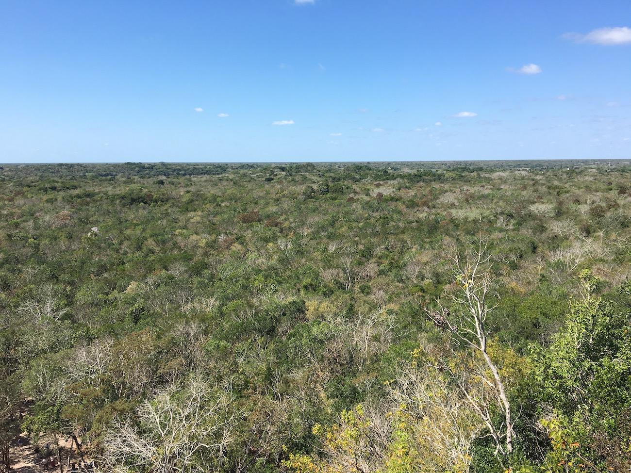 Uitzicht vanaf Coba, Yucatán