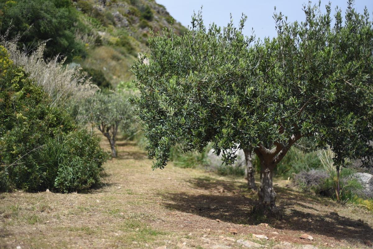 Zingaro wandelen in Sicilie