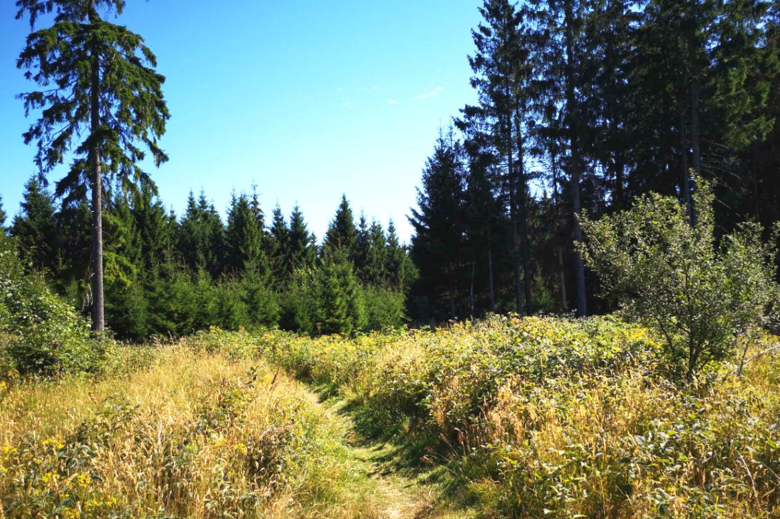 Wandelen in Bad Laasphe