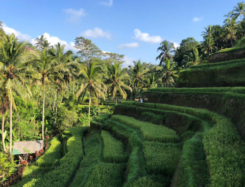 5 x doen in Ubud en de omgeving