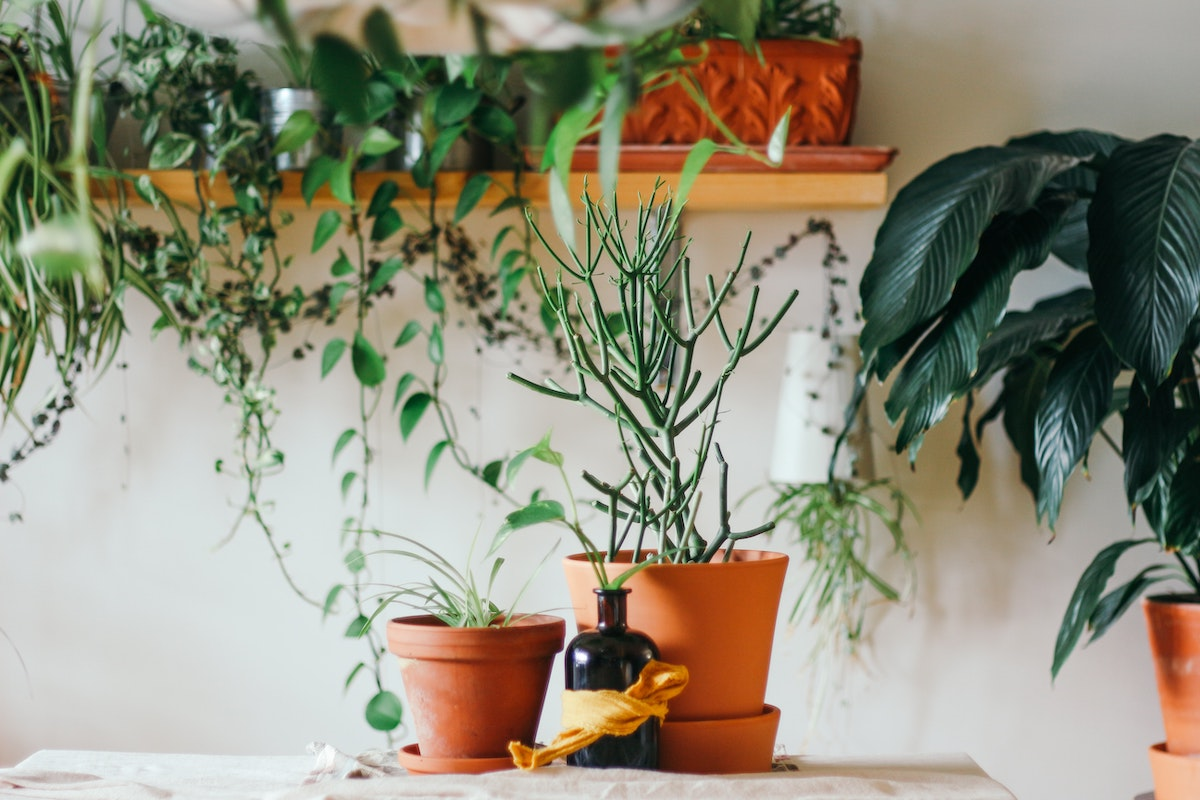 apothekersflesje planten natuurlijke ingredienten